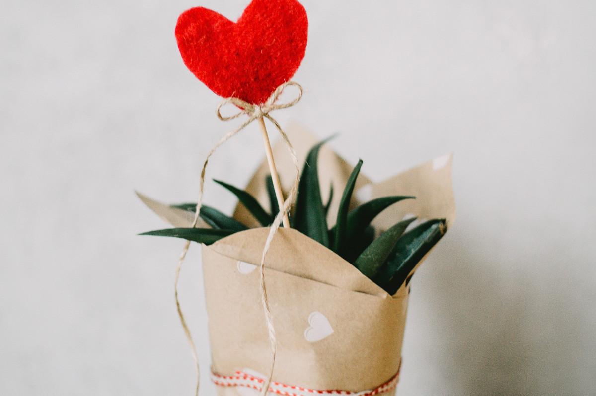 Aloes - podstawowe informacje o aloesie
